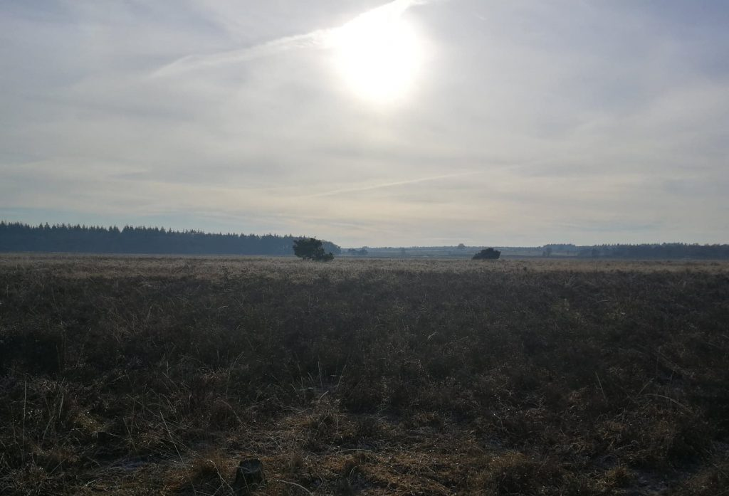 Review: WanderMind op de Veluwe.